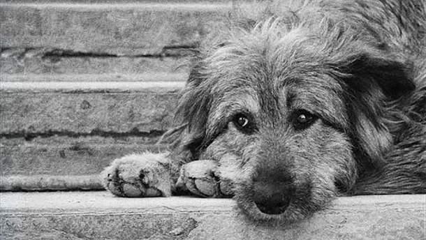 У Києві чоловік жорстоко побив безпритульного собаку