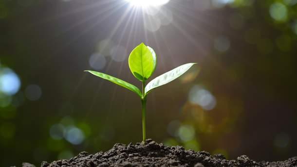 Вещество, которое широко используют для выращивания растений, вызывает рак