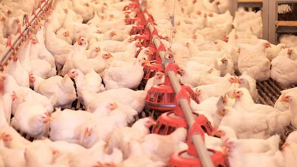 И снова рекорд: Украина экспортировала огромный объем птицы