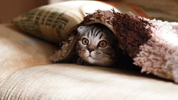 Люди можуть заражати тривожністю домашніх тварин