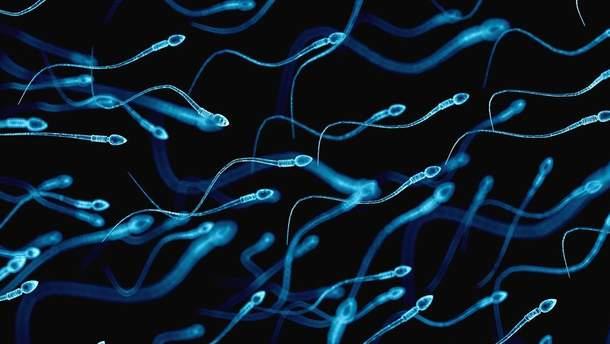 """Виявили перевагу """"старих"""" сперматозоїдів над """"молодими"""""""