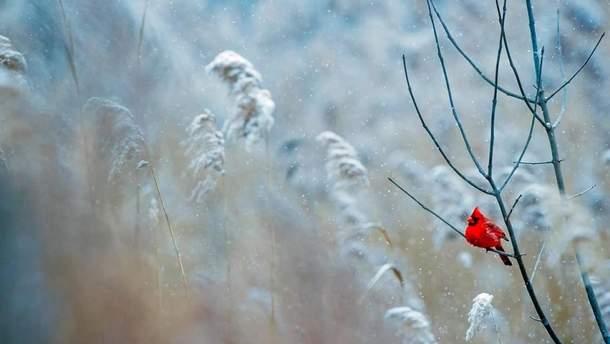 Погода 20 февраля 2019 Украина - прогноз погоды от синоптика