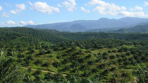 Плантации пальмовых деревьев