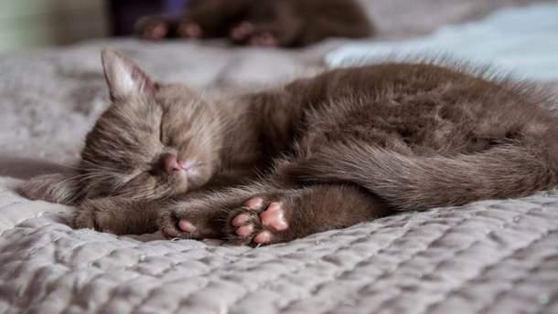 Фото реального котика