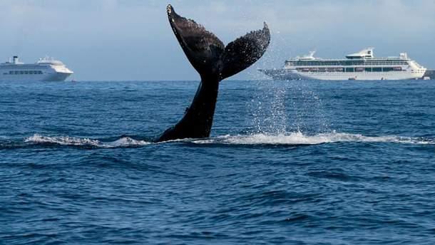 """В Японии кит """"протаранил"""" паром"""