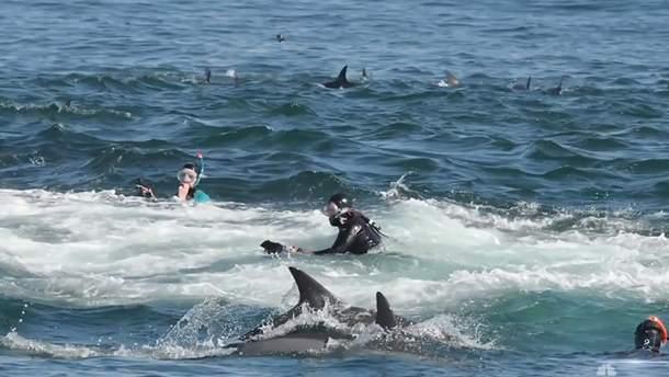 У берегов ЮАР кит проглотил дайвера, но сразу же выплюнул его в океан