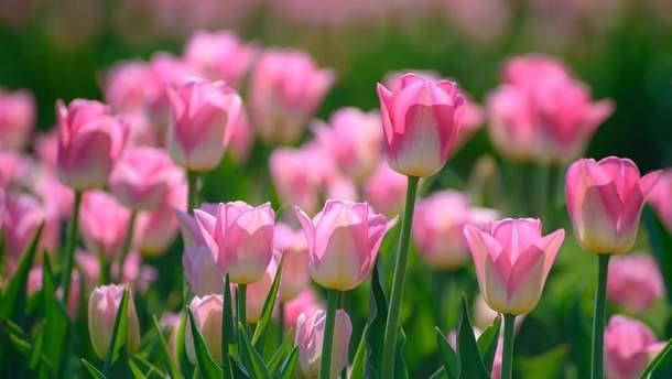 Погода 13 березня 2019 Україна - синоптик обіцяє знову весну