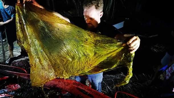 40 кілограм поліетилену у шлунку кита