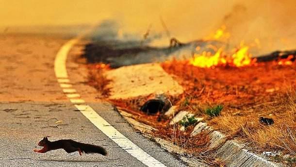 В Польше в результате сжигания травы погиб человек