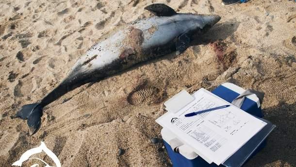 Дельфіни, ймовірно. потрапили у риболовецькі сітки