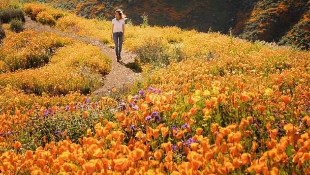 Маки расцвели на полях Южной Калифорнии