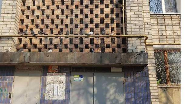 В доме в Бердянске закрыли сеткой пролеты между этажами, где любили сидеть голуби
