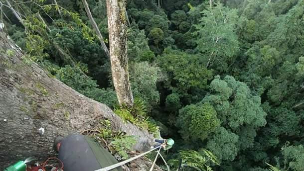 Дослідники виявили найвище у світі тропічне дерево