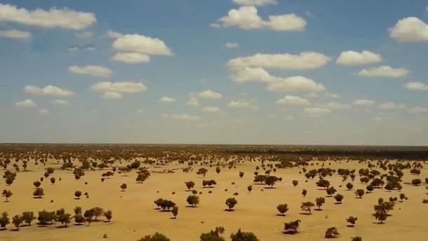"В Африке строится ""зеленая стена"" на границе с Сахарой"