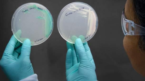 Смертельный грибок Candida auris - симптомы и лечение