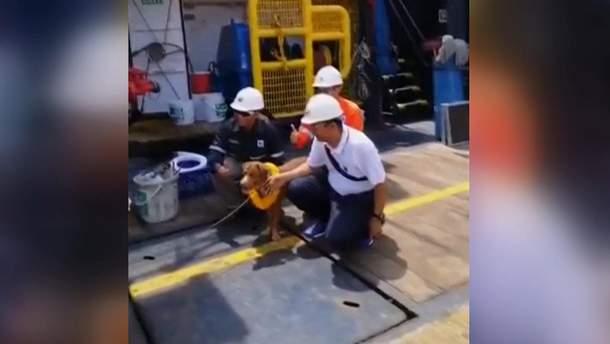 В Таїланді врятували собаку