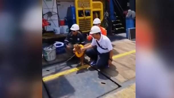 Рабочие нефтяной вышки спасли пса, который плыл в220км отберега
