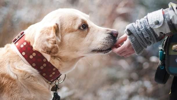 Собаки продовжують життя хазяїв