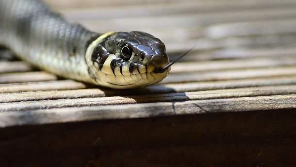 Як уникнути укусу змії