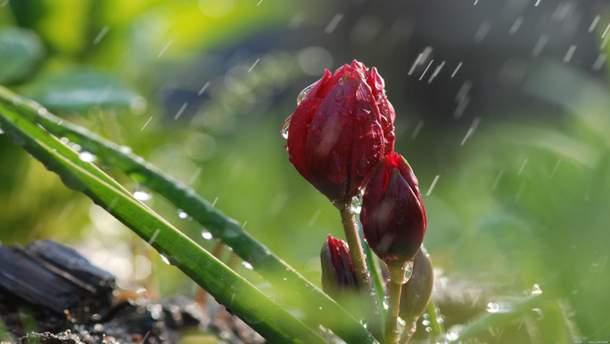 Погода 27 апреля 2019 Украина - на западе и севере дожди с грозами