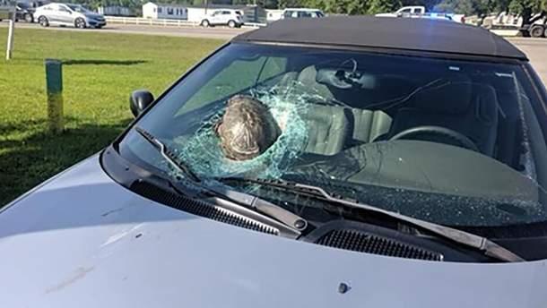 Черепаха на огромной скорости пробила лобовое стекло автомобиля
