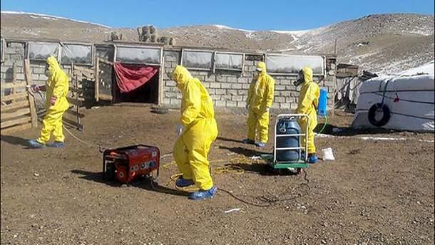 От бубонной чумы в Монголии умерли супруги - что известно о чуме - 2019