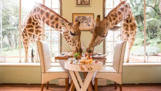 Сніданок з жирафами, готель Giraffe Manor