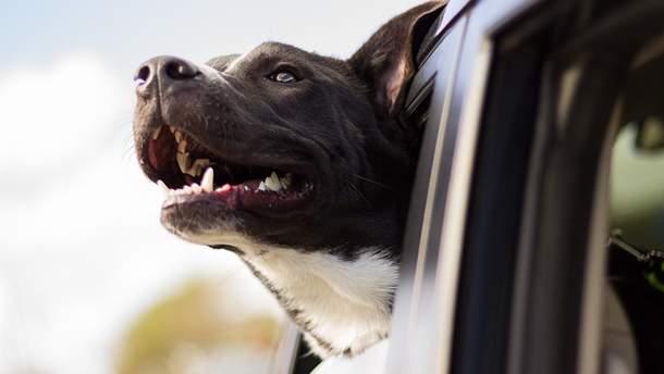 Собачья болезнь, которая передается людям