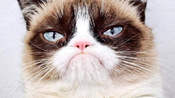 Умер Grumpy Cat - почему кот стал мемом, все о Grumpy Cat
