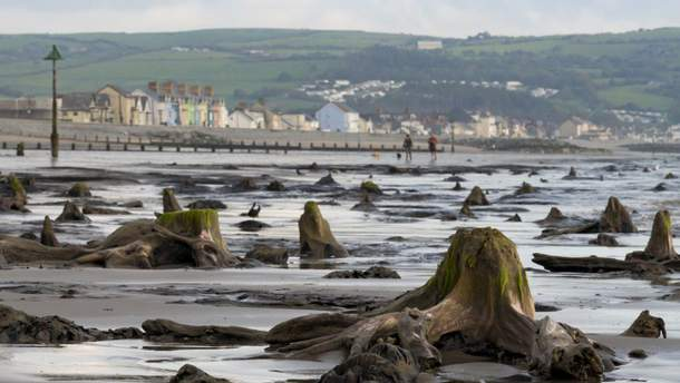 Ураган помог найти древний лес в Великобритании