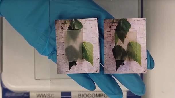 Прозрачное дерево для энергоэффективных домов изобрели в Швеции