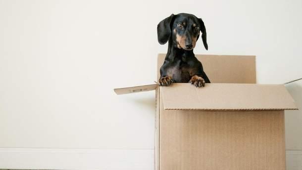 Як зробити переїзд простішим