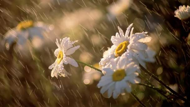 Погода 31 мая 2019 в Украине - какую погоду обещают синоптики