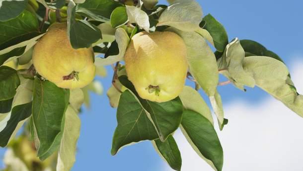 Крупнейший в Европе фруктовый завод строит украинская компания