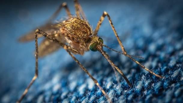 Створили грибок, який знищує малярійних комах