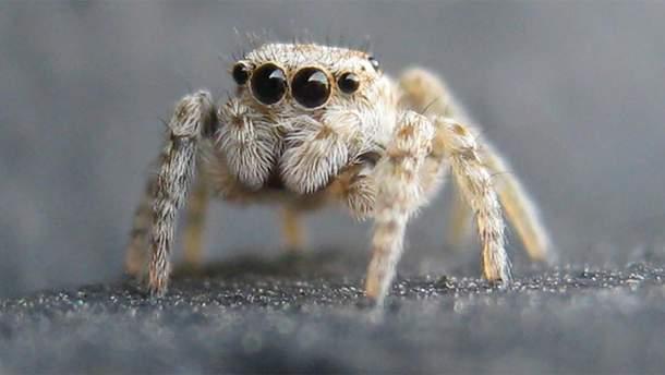 Врачи обнаружили в ухе пациентки гнездо тропического паука