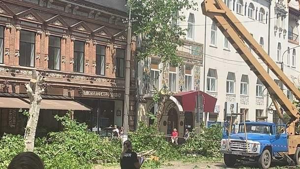 Обрезка деревьев в Днепре