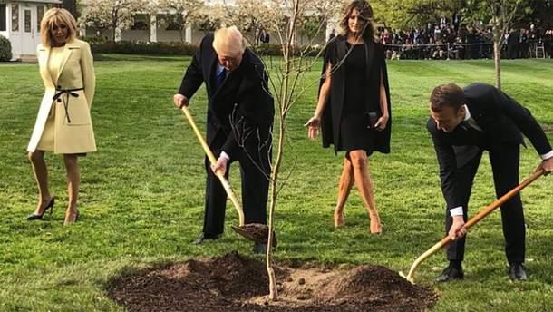 Макрон и Трамп посадили дерево дружбы, а оно погибло