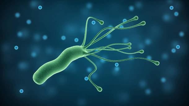 Хеликобактер пилори - симптомы, диагностика и лечение инфекции