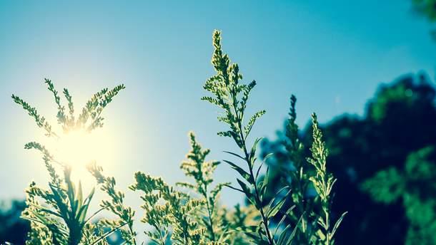 Погода 25 червня 2019 Україна - синоптик обіцяє спеку та дощі