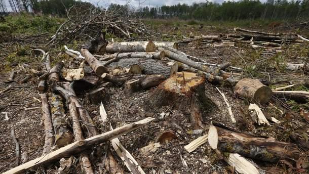 Ліси рубають – штрафи зростають