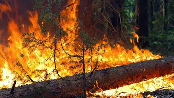 Возле Станицы Луганской загорелся лес