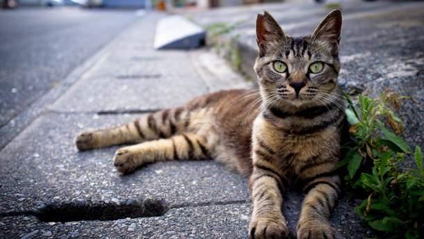 Во Львове впервые в мире посчитали уличных котов