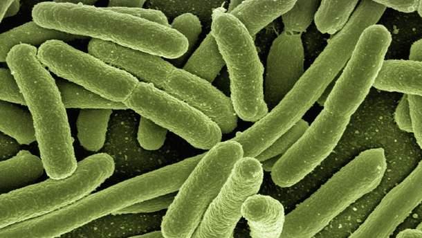 Бактерії допоможуть побороти рак