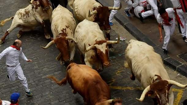 На ежегодном забеге быков в Испании пострадали люди