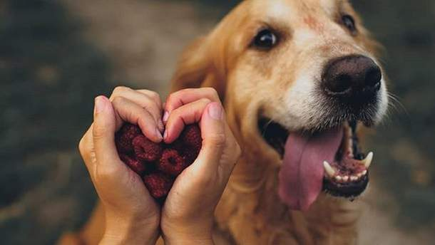 Як собаки можуть допомогти діагностувати рак