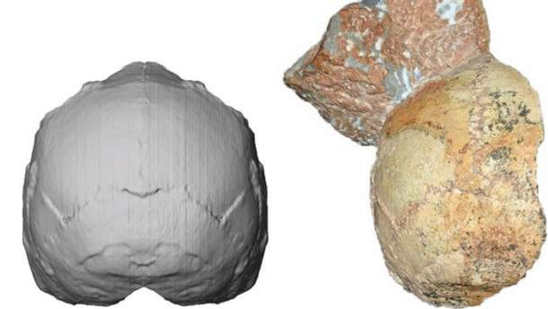 Комп'ютерна реконструкція знайденого черепа