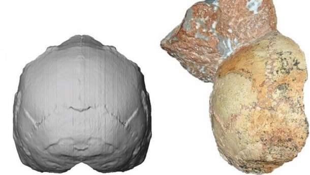 Компьютерная реконструкция найденного черепа