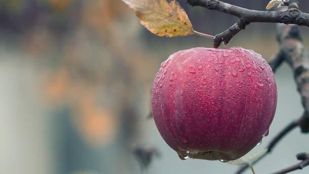 Яблука допоможуть наростити м'язи