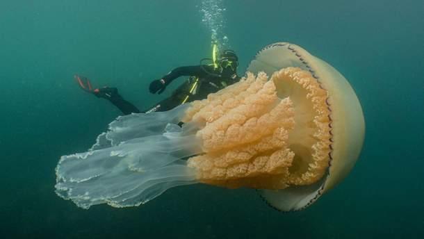 Гигантская медуза в водах Британии